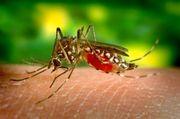 Yellow Fever Vaccine Nottingham